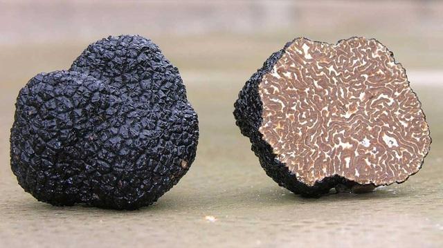 Loại nấm đắt như vàng, có gì hay khiến dân sành ăn phải ráo riết lùng mua? - 4