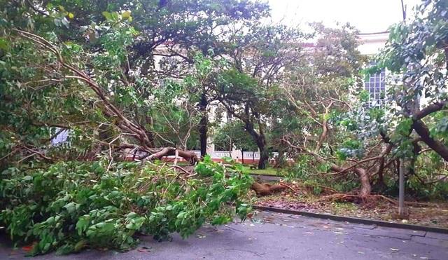Bão lũ dồn dập, Đại học Huế thiệt hại nặng nề - 6