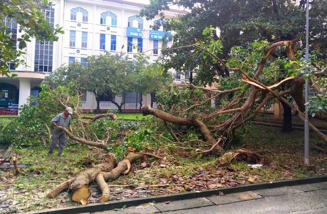 Bão lũ dồn dập, Đại học Huế thiệt hại nặng nề - 7