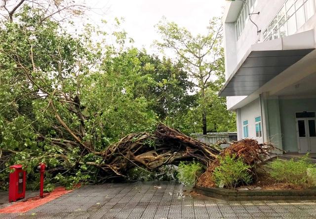 Bão lũ dồn dập, Đại học Huế thiệt hại nặng nề - 2