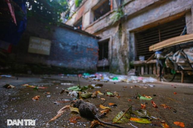 Cảnh sống ám ảnh trong nhà tập thể ổ chuột giữa đất vàng Thủ đô - 7