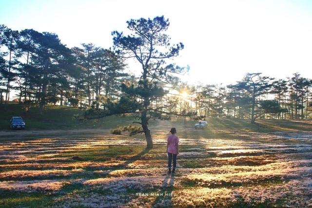 Đẹp như tranh vẽ mùa cỏ hồng Đà Lạt - 2
