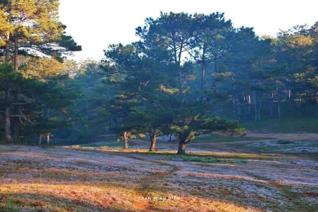 Đẹp như tranh vẽ mùa cỏ hồng Đà Lạt - 7