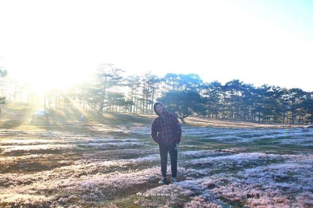 Đẹp như tranh vẽ mùa cỏ hồng Đà Lạt - 6