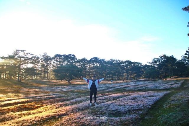 Đẹp như tranh vẽ mùa cỏ hồng Đà Lạt - 4