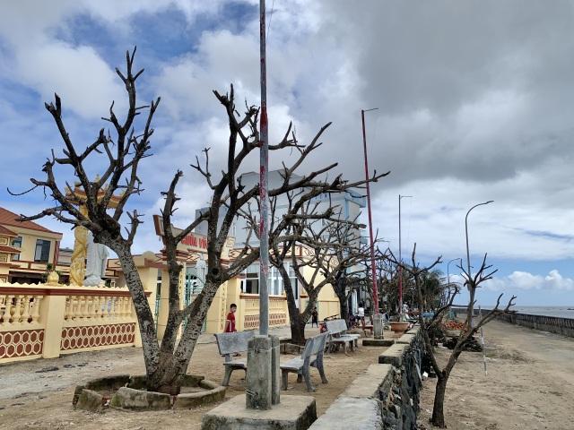 Cây xanh trên đảo tiền tiêu trụi lá sau bão lớn - 1
