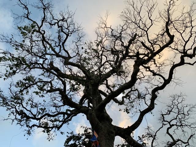 Cây xanh trên đảo tiền tiêu trụi lá sau bão lớn - 5