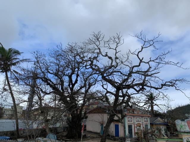 Cây xanh trên đảo tiền tiêu trụi lá sau bão lớn - 6