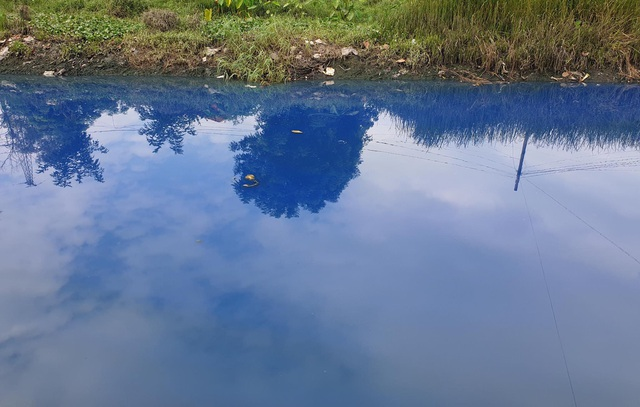 Hoang mang vì nước kênh đổi màu xanh kỳ lạ - 2