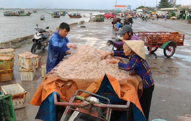 Trúng luồng ruốc, ngư dân kiếm triệu mỗi ngày - 11
