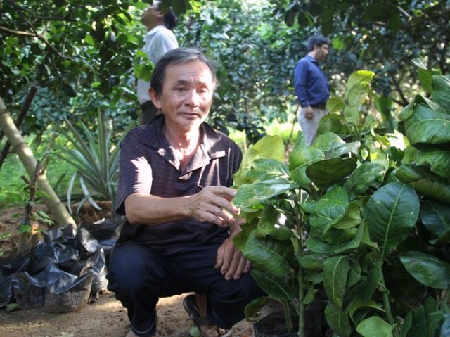 Nông dân Hoài Ân đổi đời nhờ trồng bưởi da xanh - 3