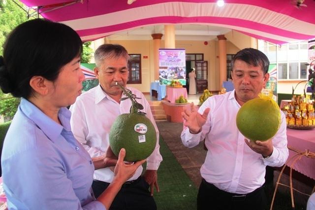 Nông dân Hoài Ân đổi đời nhờ trồng bưởi da xanh - 2