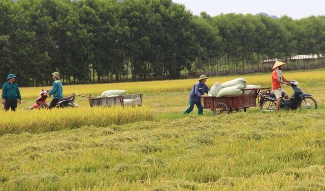 9X bỏ việc an nhàn về quê chế biến gạo, thu hàng chục tỷ đồng mỗi năm - 5