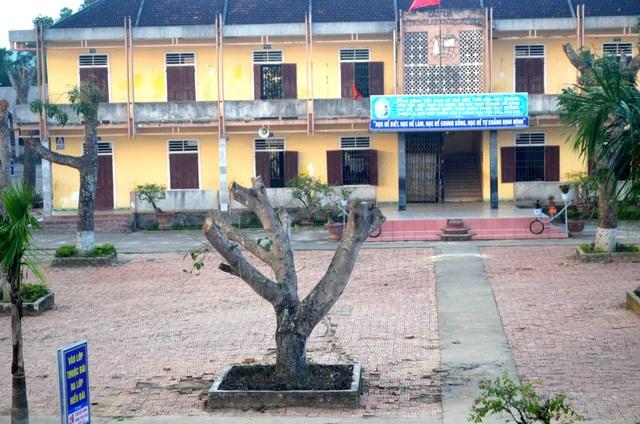 Hàng loạt cây xanh trong khuôn viên nhà trường bị cắt tỉa cành trơ trọi - 4