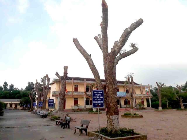 Hàng loạt cây xanh trong khuôn viên nhà trường bị cắt tỉa cành trơ trọi - 5