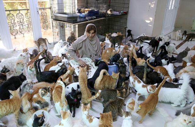 Bên trong ngôi nhà của người phụ nữ chung sống với 480 con mèo, 12 chú chó - 2