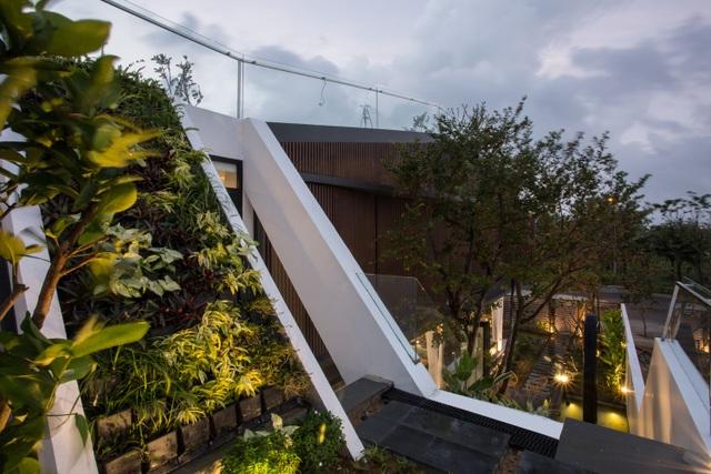 Vợ chồng ở Đà Nẵng đổ đất làm vườn tuyệt đẹp trên sân thượng căn biệt thự - 12