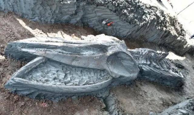 Tìm thấy hóa thạch cá voi cổ đại siêu hiếm 5000 năm ở Thái Lan - 1