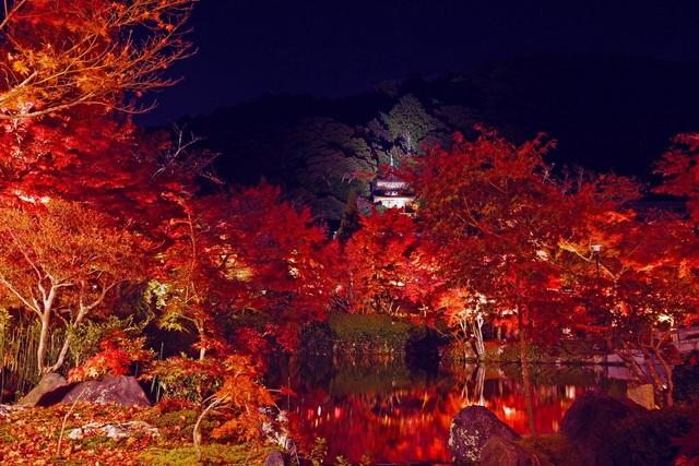 Những cảnh sắc hiếm có khó tìm ở nước Nhật tháng 11 - 1