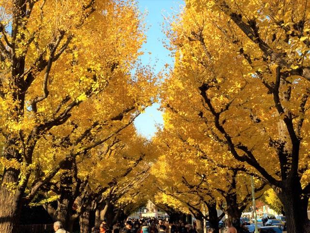 Những cảnh sắc hiếm có khó tìm ở nước Nhật tháng 11 - 5