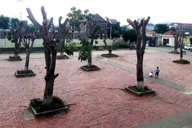 Hàng loạt cây xanh trong khuôn viên nhà trường bị cắt tỉa cành trơ trọi - 3