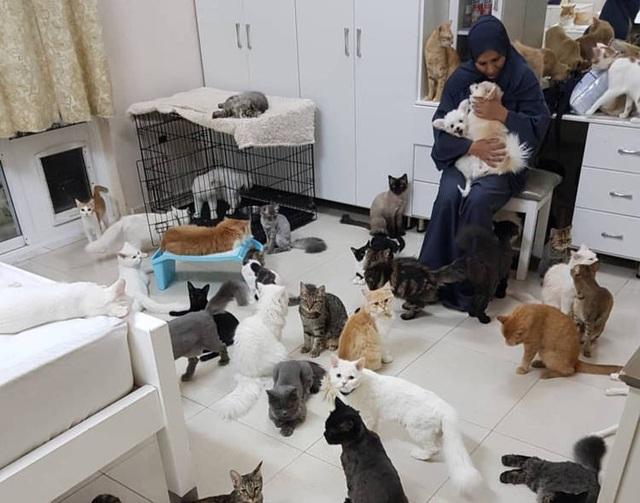 Bên trong ngôi nhà của người phụ nữ chung sống với 480 con mèo, 12 chú chó - 1