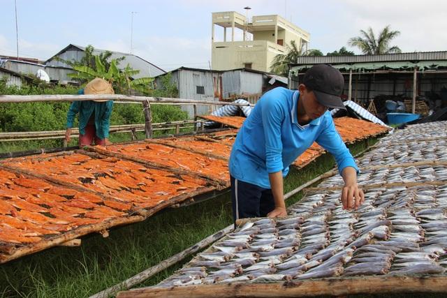 Nghề cá khô ở vùng biển Cà Mau vào mùa đón Tết - 2
