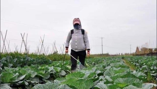 Giấc mơ sản phẩm thảo mộc bảo vệ rau màu của cô trò xứ Nghệ - 6