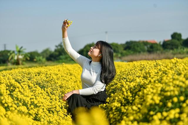 Hoa cúc tiến Vua Hưng Yên vào mùa vàng rực - 7