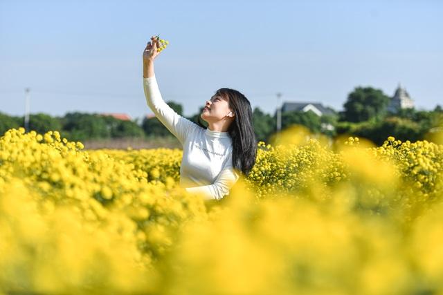 Hoa cúc tiến Vua Hưng Yên vào mùa vàng rực - 12