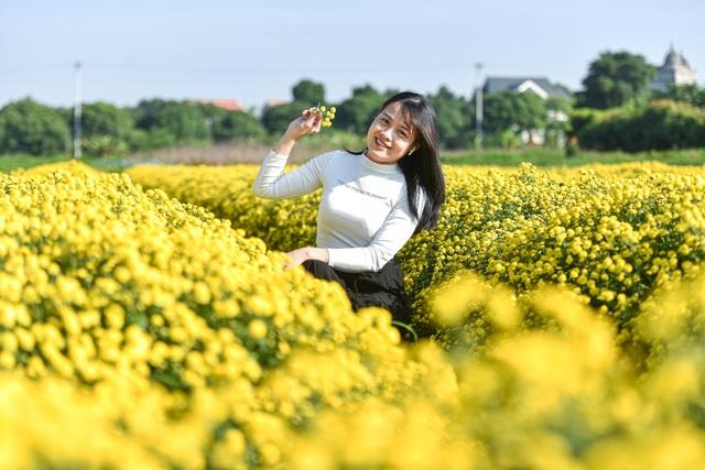 Hoa cúc tiến Vua Hưng Yên vào mùa vàng rực - 10