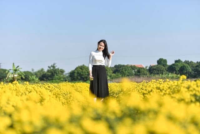 Hoa cúc tiến Vua Hưng Yên vào mùa vàng rực - 13