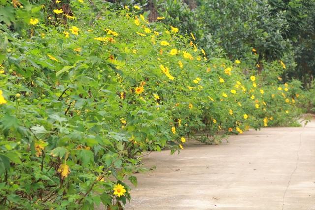 Loài hoa nổi tiếng Đà Lạt bung lụa ở Tràng An làm đắm say lòng du khách - 1