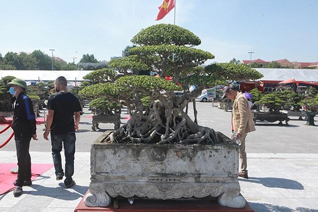 Sanh cổ của đại gia Bắc Ninh, 30 năm trước mua 7 triệu đồng, giờ lên 10 tỷ đồng - 2