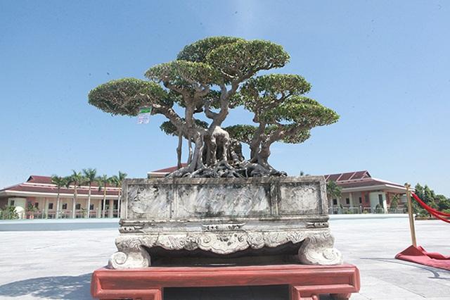 Sanh cổ của đại gia Bắc Ninh, 30 năm trước mua 7 triệu đồng, giờ lên 10 tỷ đồng - 3