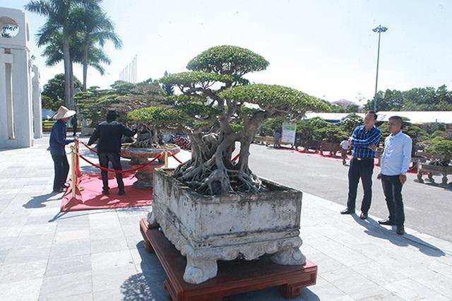Sanh cổ của đại gia Bắc Ninh, 30 năm trước mua 7 triệu đồng, giờ lên 10 tỷ đồng - 5