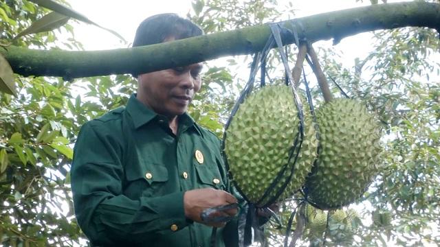 Cựu chiến binh giúp nhau thoát nghèo từ mô hình vườn cây đa canh - 1