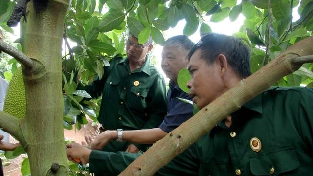 Cựu chiến binh giúp nhau thoát nghèo từ mô hình vườn cây đa canh - 2