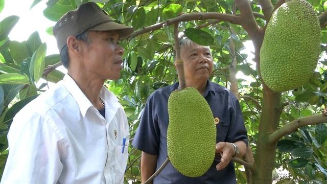 Cựu chiến binh giúp nhau thoát nghèo từ mô hình vườn cây đa canh - 3