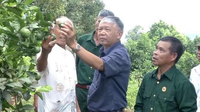 Cựu chiến binh giúp nhau thoát nghèo từ mô hình vườn cây đa canh - 4