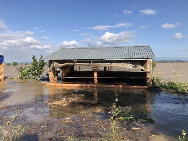 Nông dân khóc ròng khi thủy điện xả lũ cuốn trôi hàng chục lồng cá - 5