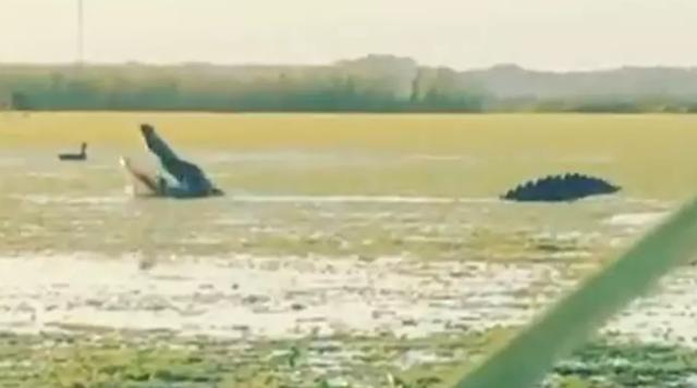 Clip triệu view: Cá sấu hớt tay trên thợ săn, đớp vịt nhai ngấu nghiến - 1