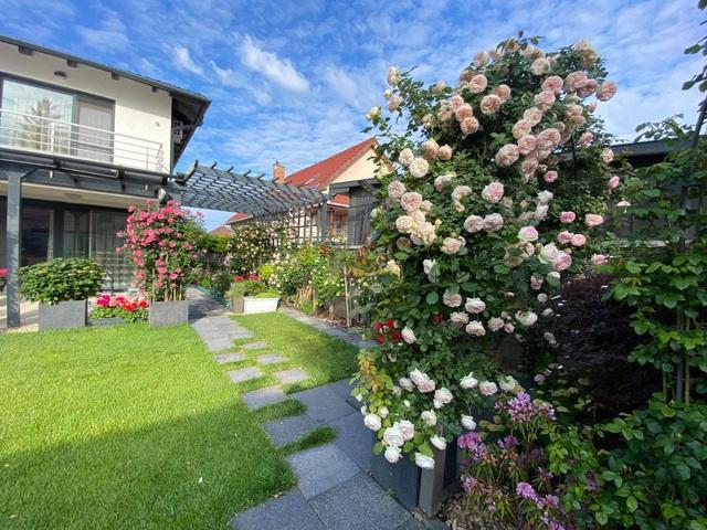 Choáng ngợp vườn hồng ngoại đẹp như cổ tích của vợ chồng Việt ở trời Tây - 1