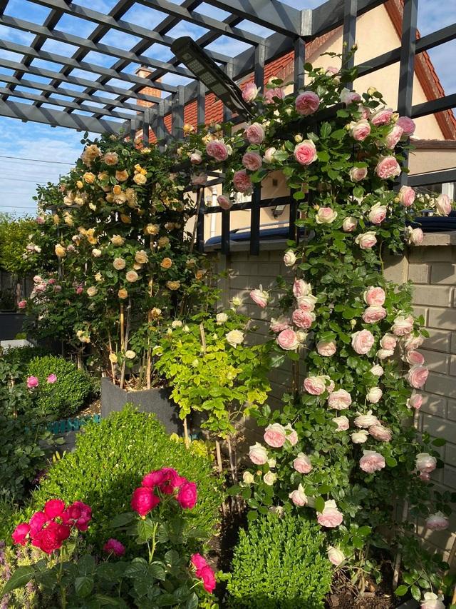 Choáng ngợp vườn hồng ngoại đẹp như cổ tích của vợ chồng Việt ở trời Tây - 8