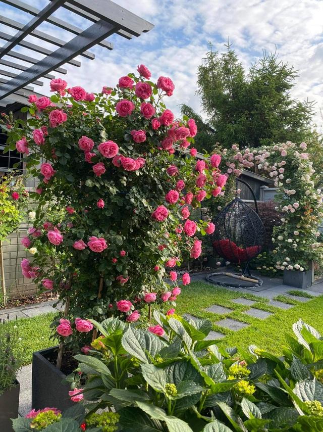 Choáng ngợp vườn hồng ngoại đẹp như cổ tích của vợ chồng Việt ở trời Tây - 7