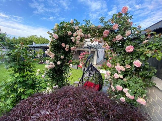 Choáng ngợp vườn hồng ngoại đẹp như cổ tích của vợ chồng Việt ở trời Tây - 3