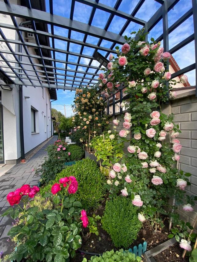 Choáng ngợp vườn hồng ngoại đẹp như cổ tích của vợ chồng Việt ở trời Tây - 6