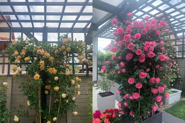 Choáng ngợp vườn hồng ngoại đẹp như cổ tích của vợ chồng Việt ở trời Tây - 9