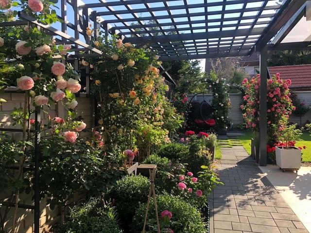 Choáng ngợp vườn hồng ngoại đẹp như cổ tích của vợ chồng Việt ở trời Tây - 13