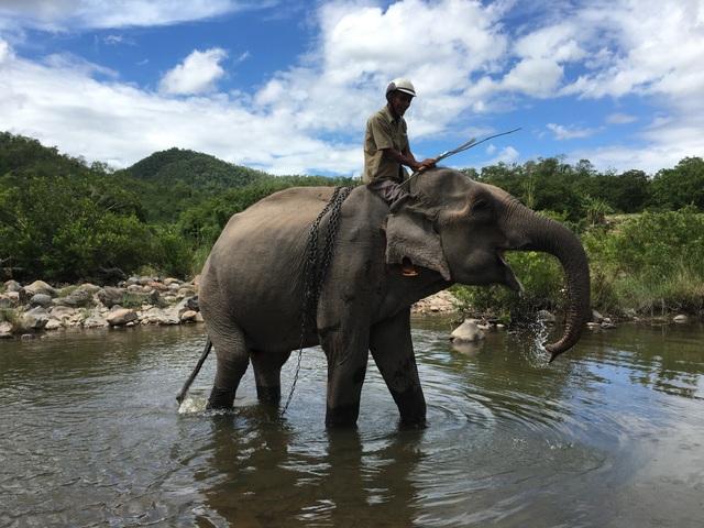 Chú voi cuối cùng ở Bắc Tây Nguyên đã chết bên bờ suối - 1